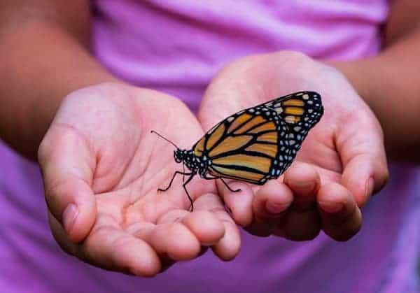 Das heilige Versteck des Schmetterlings