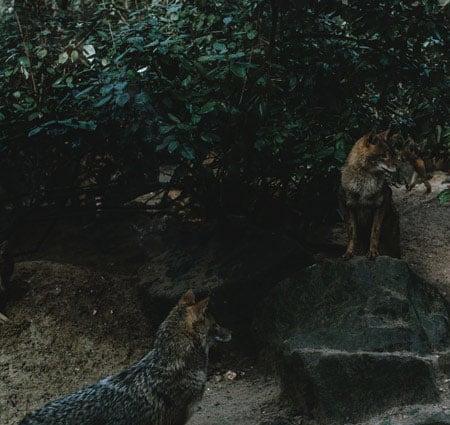 Rückführungstherapie: Wilde Tiere